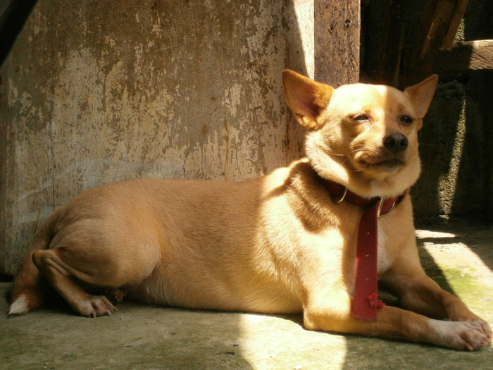 My very loyal and lovely dog, Sophie - Habagat, Philippines