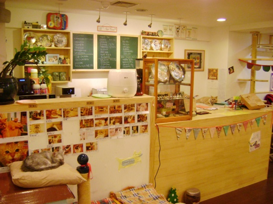 Cat Café in Myeongdong, Seoul