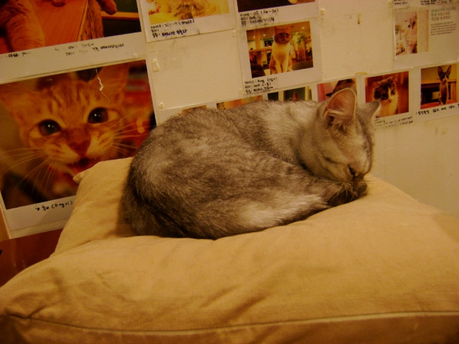 Cutie Mi-So sleeping on a pillow --- Cat Café Myeongdong, Seoul