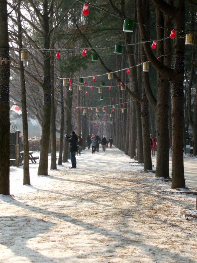 Lanterns hanging on this tree lane --- Winter in Seoul December 2012 - Day 3: Nami Island