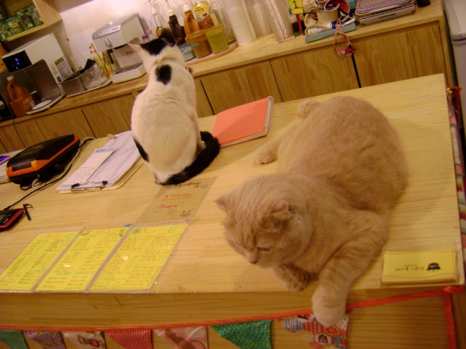 Manning the counter like a boss --- Cat Café Myeongdong, Seoul