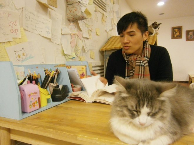 Mon looking over drawings in this corner --- Cat Café Myeongdong, Seoul