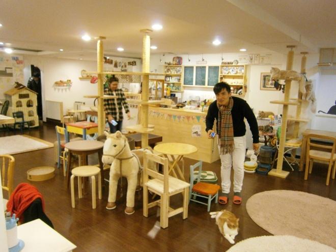 Mon stalking the fattest kitty --- Cat Café Myeongdong, Seoul