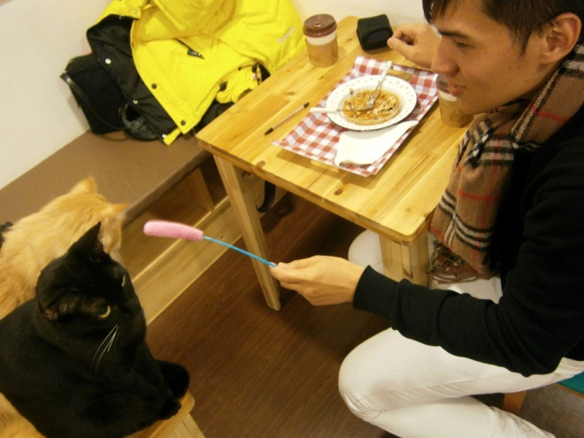 Not feeling the cattail --- Cat Café Myeongdong, Seoul