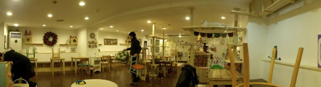 Panorama shot of Cat Café, Myeongdong