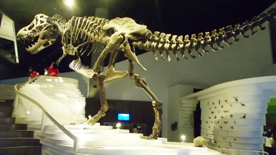 The Tyrannosaurus rex skeleton The Tyrannosaurus rex skeleton