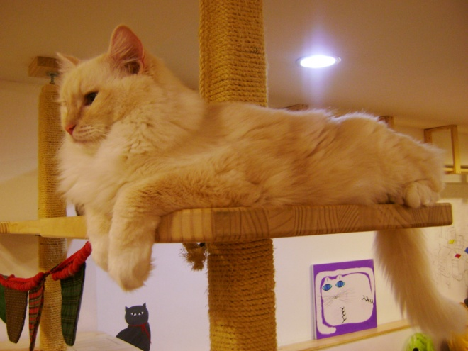 This kitty did not go down from its post LOL --- Cat Café Myeongdong, Seoul