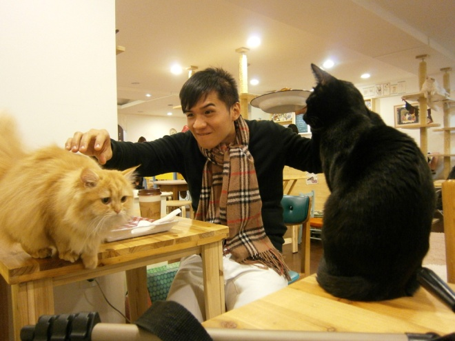 Two kitties trying to raid our table --- Cat Café Myeongdong, Seoul