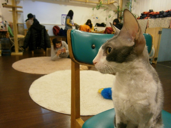 Ugh what a cute kitty --- Cat Café Myeongdong, Seoul