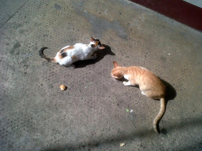 Feeding the FC kitties