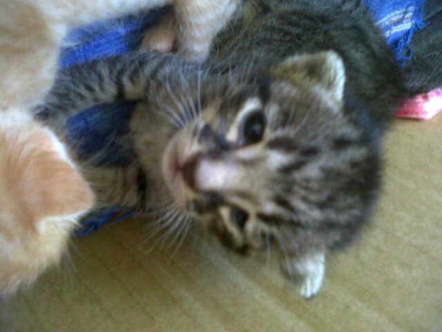 Popo - newborn kitty