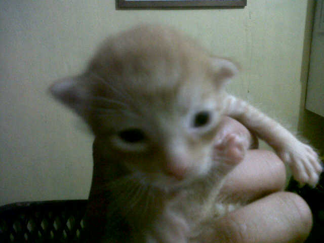 Uyu - newborn kitty