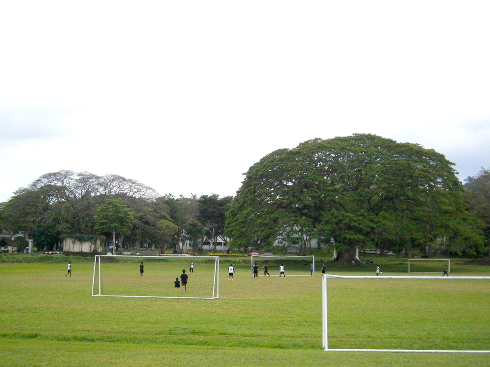 Freedom Park and the Fertility Tree - UP Los Baños