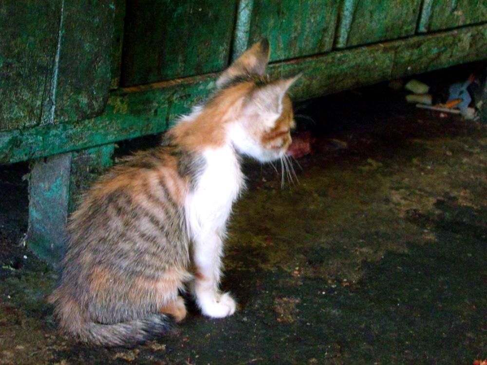 Kitty in the market - Laoag, Ilocos Norte