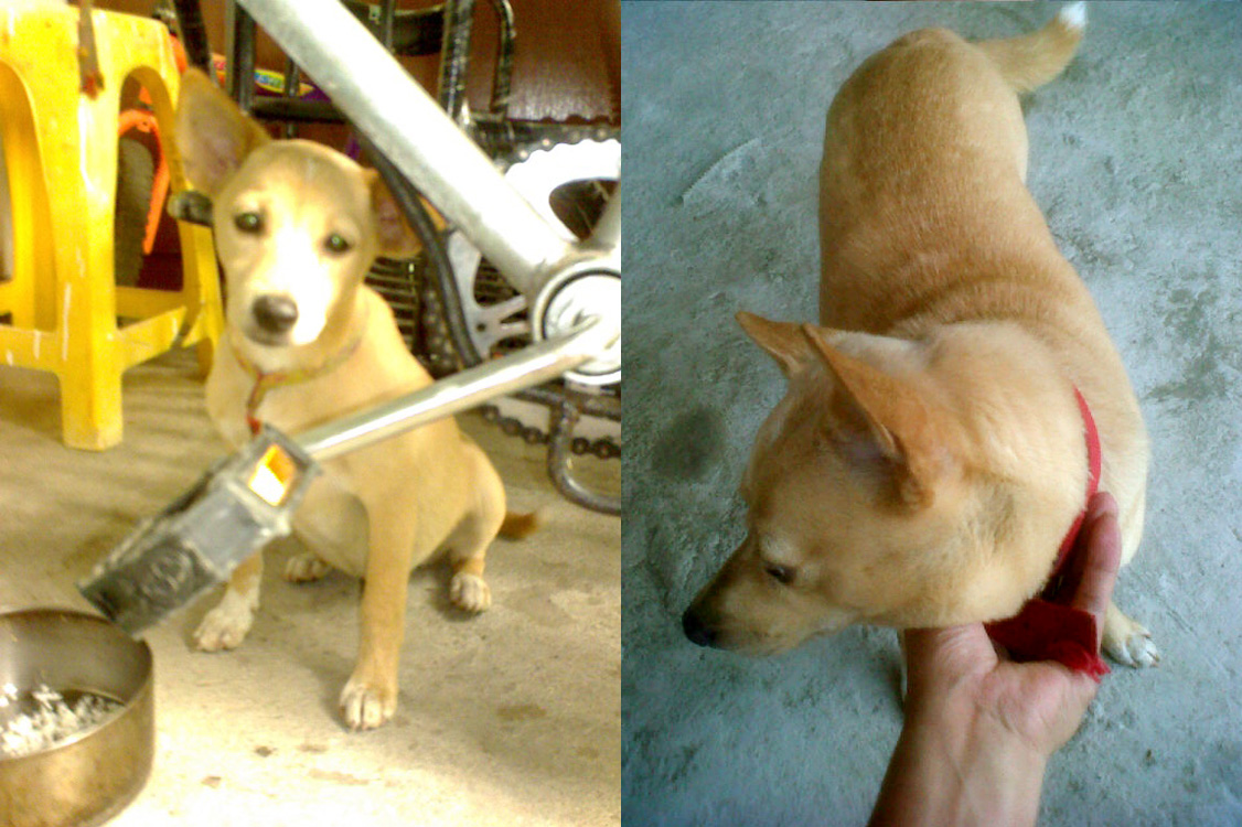 Sophie five years ago (L) and today (R)
