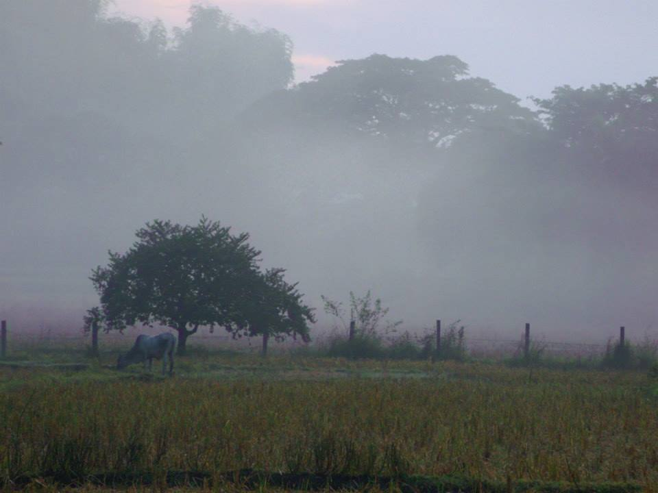 Foggy field in the morning