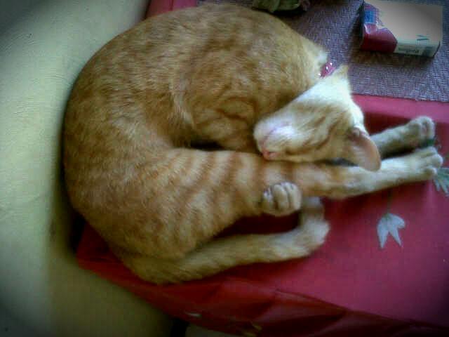 Uyu while taking a nap last February